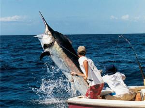 Международный рыболовный тур на Маврикии!