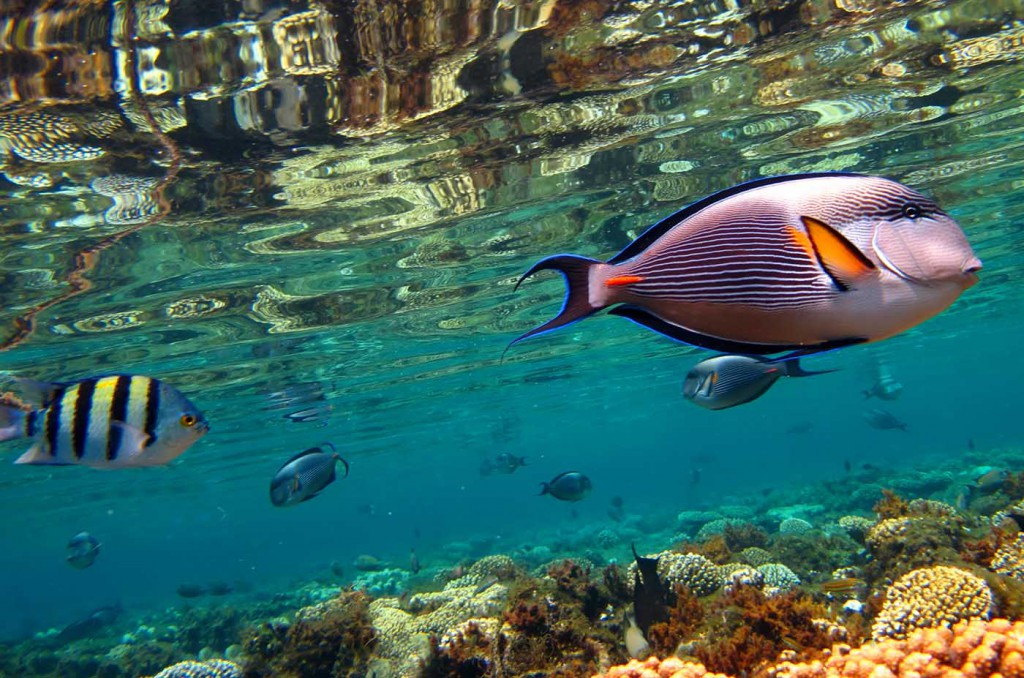 red-sea-5