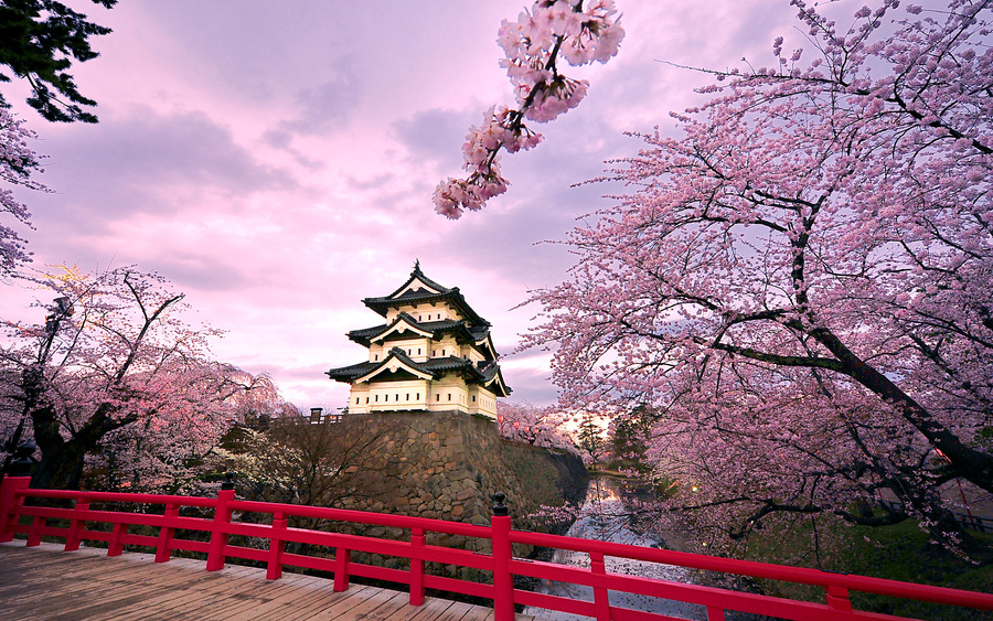 弘前城と桜 (Hirosaki Castle and cherry blossoms)