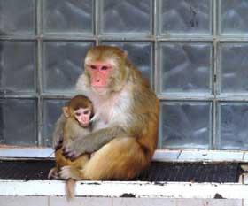 абхазия-сухум-обезьяний-питомник-блок